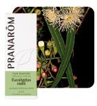 Huile Essentielle Eucalyptus Radié - 10 ml